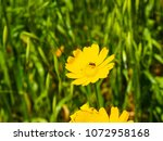 view of the nature  in the... | Shutterstock . vector #1072958168