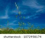 view of the nature  in the... | Shutterstock . vector #1072958174