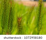 view of the nature  in the... | Shutterstock . vector #1072958180