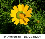 view of the nature  in the... | Shutterstock . vector #1072958204