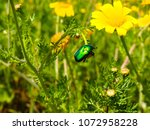 view of the nature  in the... | Shutterstock . vector #1072958228