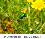 view of the nature  in the... | Shutterstock . vector #1072958234