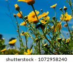 view of the nature  in the... | Shutterstock . vector #1072958240