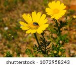 view of the nature  in the... | Shutterstock . vector #1072958243