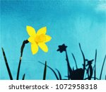 yellow daffodil narcissus... | Shutterstock . vector #1072958318