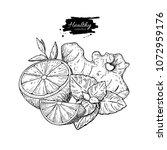 lemon  ginger and mint vector... | Shutterstock .eps vector #1072959176