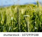 view of the nature  in the... | Shutterstock . vector #1072959188