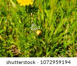 view of the nature  in the... | Shutterstock . vector #1072959194