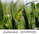 view of the nature  in the... | Shutterstock . vector #1072959230