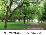 nature green tree jogging path | Shutterstock . vector #1072962290