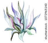 watercolor hand drawn agave... | Shutterstock . vector #1072965140