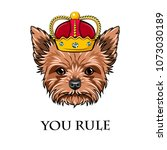 yorkshire terrier queen. crown. ... | Shutterstock .eps vector #1073030189