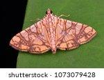 macro image of a beautiful moth ...   Shutterstock . vector #1073079428