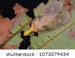 macro image of a dobsonfly...   Shutterstock . vector #1073079434