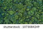 aerial top view forest  texture ... | Shutterstock . vector #1073084249