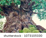 The Tree Of Life At Animal...