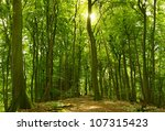 Green Sunny Summer Forest With...