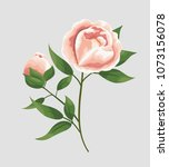 peony flowers in the style of... | Shutterstock .eps vector #1073156078