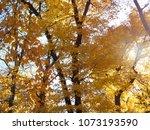Small photo of Trees of Minnesota