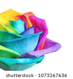 Amazing rainbow rose flower on...