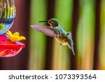 hummingbird coming to feeder | Shutterstock . vector #1073393564