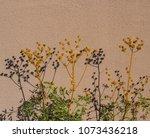 dried seeds of ruta graveolens  ... | Shutterstock . vector #1073436218