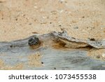 Small photo of close up log bury in the sand