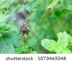 Small photo of Tephritidae fly in the garden