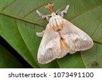 macro image of a beautiful moth ...   Shutterstock . vector #1073491100