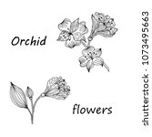 hand drawn sketch style flowers ...   Shutterstock .eps vector #1073495663