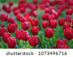 spring flowers with modern... | Shutterstock . vector #1073496716