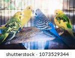 four adorable cute small... | Shutterstock . vector #1073529344