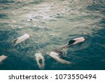 dolphins in the sea  new zealand | Shutterstock . vector #1073550494