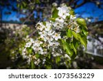flowers in full bloom. | Shutterstock . vector #1073563229