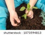 happy blond boy helps plant... | Shutterstock . vector #1073594813