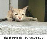 domestic cat sleeping | Shutterstock . vector #1073605523