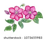watercolor hand painted pink ... | Shutterstock . vector #1073655983