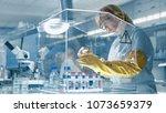 senior female epidemiologist... | Shutterstock . vector #1073659379