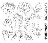 Stock photo peony flower and leaves line drawing hand drawn outline floral set simple botanical peonies 1073667470
