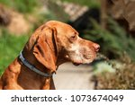 dog with collar. collars... | Shutterstock . vector #1073674049