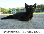 A small black cat with yellow round eyes is laying alone outdoor on concrete floor and staring up, with the blurry background of buildings, trees and mountains on a warm sunny day.