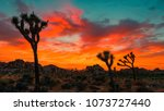 Orange Sky Over The Desert Wit...