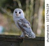 close up of a barn owl | Shutterstock . vector #1073746139