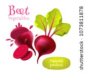 vector beets isolated on... | Shutterstock .eps vector #1073811878