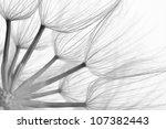 Extreme Close Up Of Dandelion....