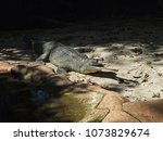 Small photo of Gharial, Indian Gavial, Gavial or Fish-eating Crocodile (Gavialis gangeticus) : a crocodilian in the family Gavialidae, and is native to the northern part of the Indian Subcontinent.
