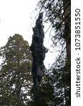 Charred Sequoia Tree  Redwood...