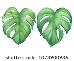 set of green tropical jungle... | Shutterstock . vector #1073900936