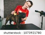 female groomer brushing french... | Shutterstock . vector #1073921780