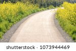 yellow flowers blossoming... | Shutterstock . vector #1073944469